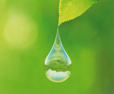 Thursday Plantation Leaf with water droplet